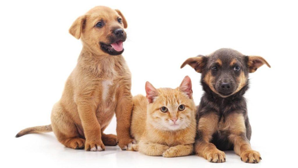 Chiots et chat